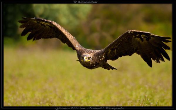 Aquila-Reale-By-Clic-77.jpg